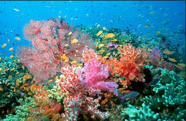 Explore The Beauty Of Caribbean: Oceans Of The World, Deep Sea
