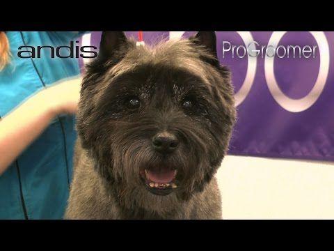 37 Grooming Guide Cairn Terrier Pet Trim Pro Groomer