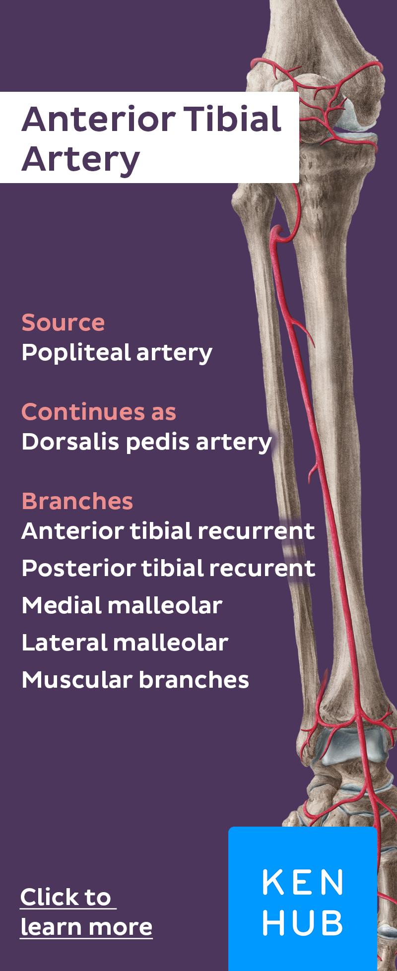 Arteryfacts Learn Anatomy Anatomy Note Taking Pinterest