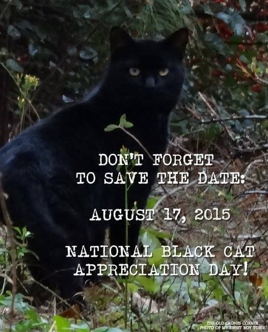 National Black Cat Appreciation Day Is August 17 Black Cat Appreciation Day National Black Cat Day Black Cat Day