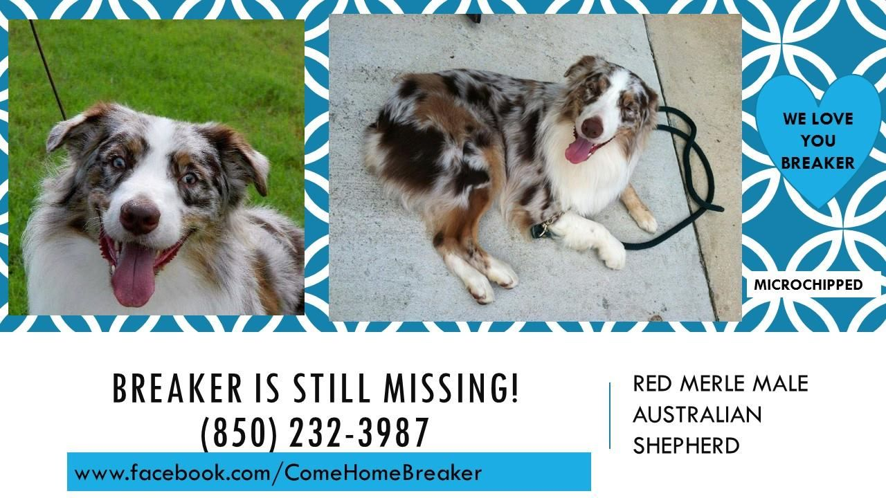 Pattie Coppinger Eckerle Dog Missing Pet Lost Found Alert Group 9 Hrs Breaker Is Still Missing Still Loved An Losing A Dog Dogs Australian Shepherd