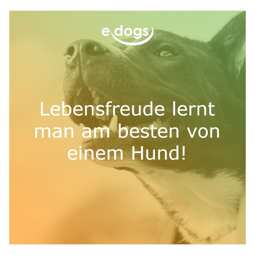 Lebensfreude Lernt Man Am Besten Von Einem Hund Hundeliebe Edogs Traumhund Hundezitate Hundemensch Hundespruch Hund Zitat Hundeliebe Ich Liebe Hunde