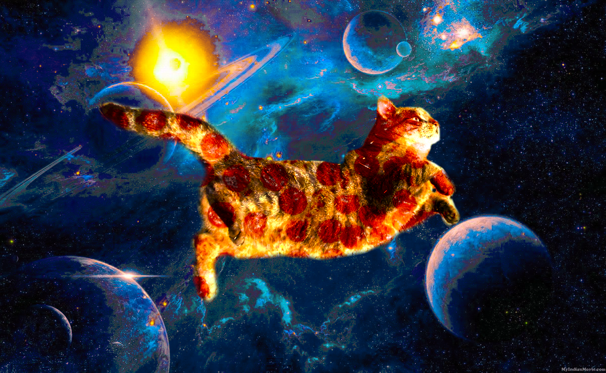 8169595fc I present to you: Pizza cats in space | Space Cats | Pizza cat ...