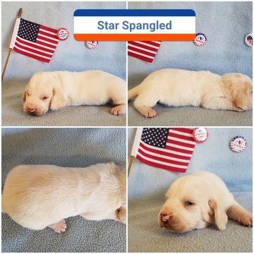 Basset Hound puppy for sale in BRYAN, TX. ADN-31192 on ...
