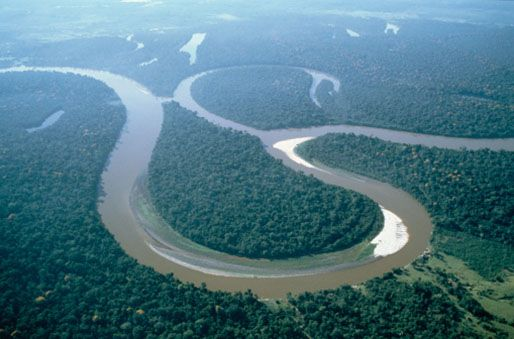 Image result for The Amazon rainforest for kids
