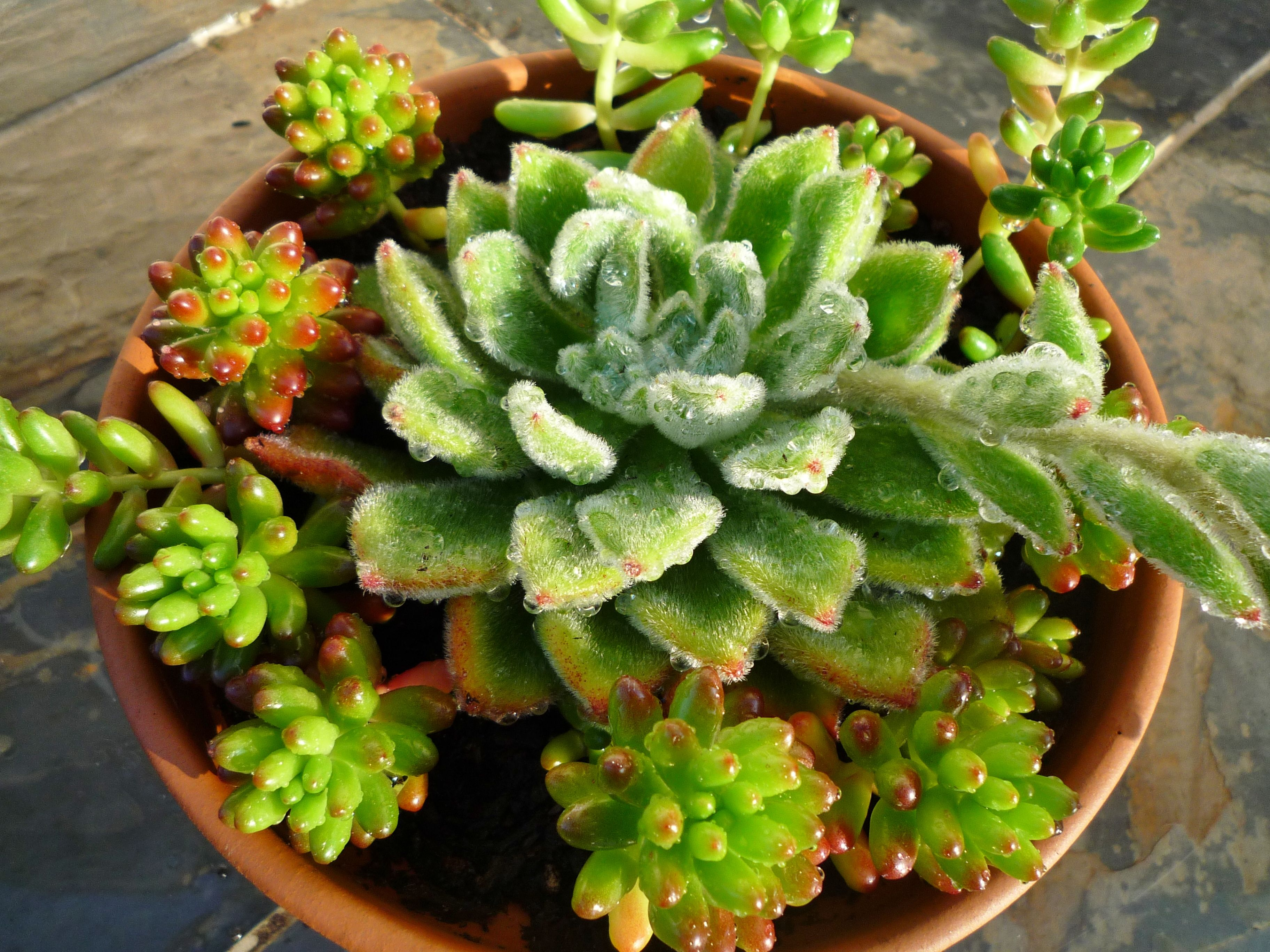 succulent dish gardens and terrariums
