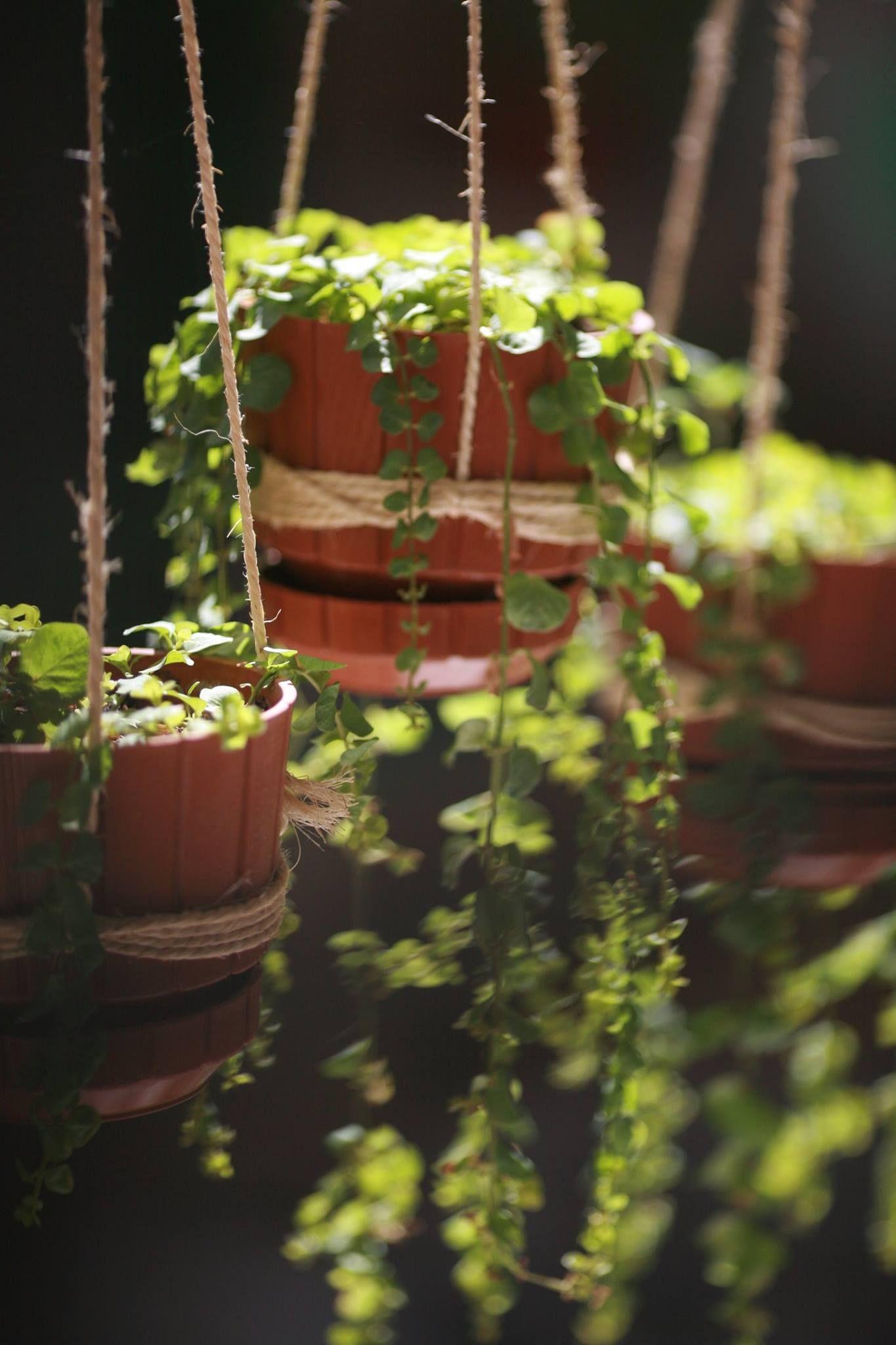 Pin by Gülbahar on vaynefoto   Pinterest   Plants, Gardens and Flowers