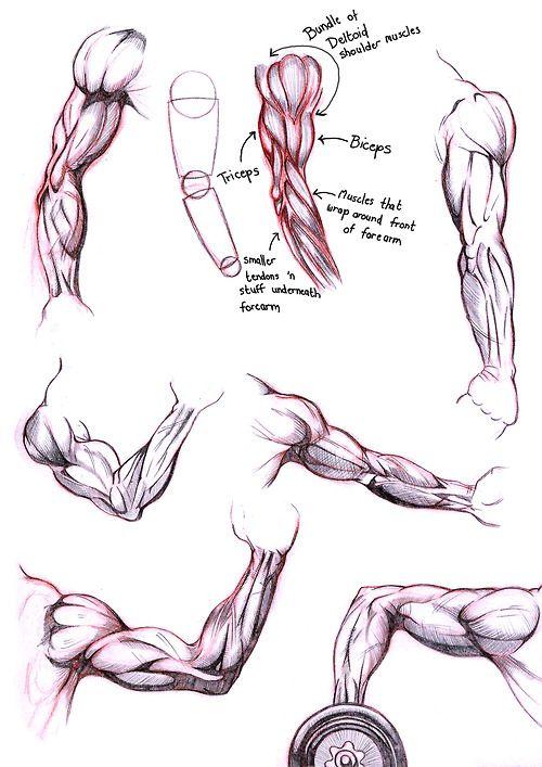 male anatomy | Tumblr | anatomy | Pinterest | Anatomy, Draw and ...