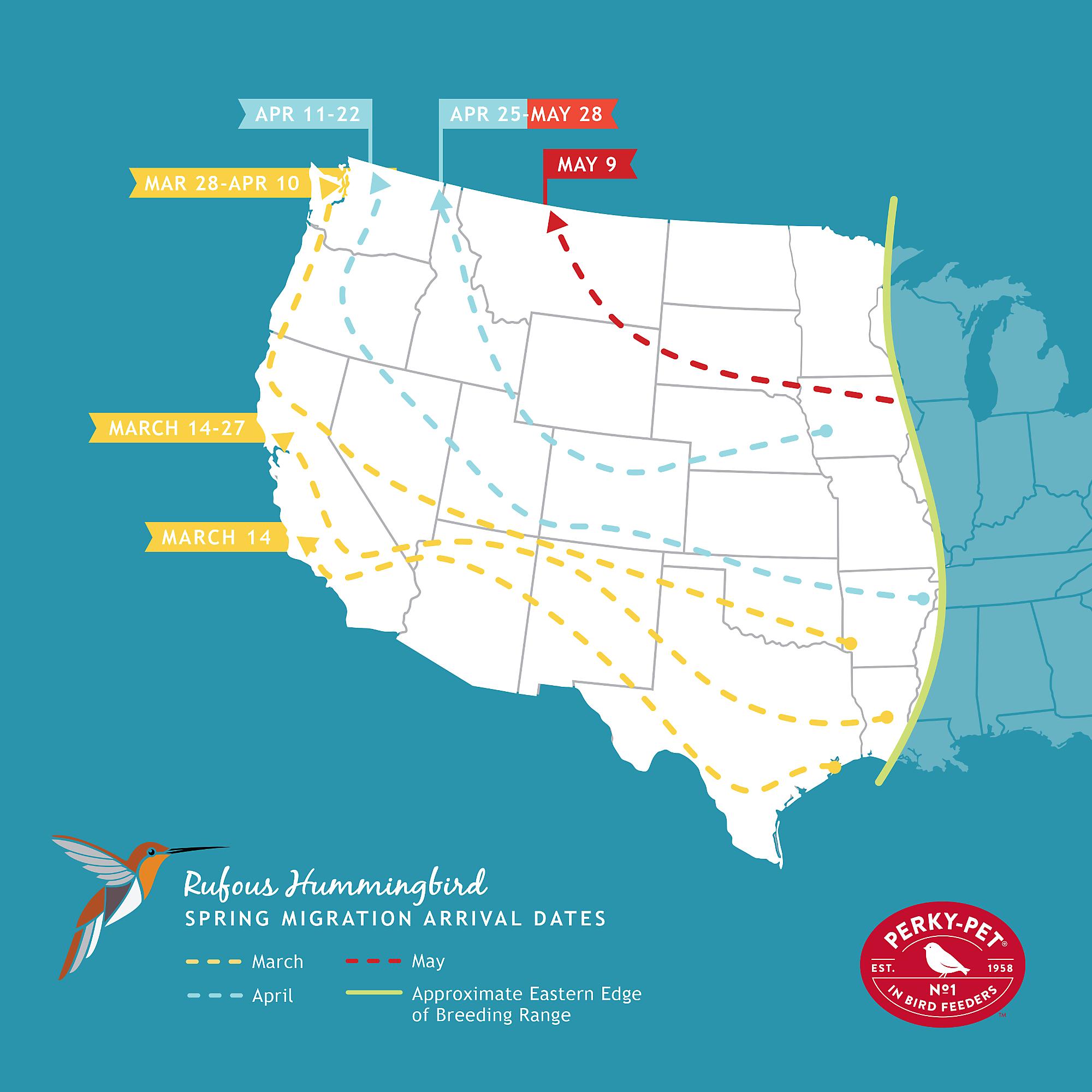 Hummingbird Migration Map rufous hummingbird migration map | Birds and Plants | Hummingbird  Hummingbird Migration Map