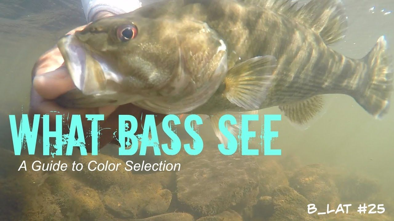 What Bass See (B.Lat #25) How to Select Lure Colors || In this video ...