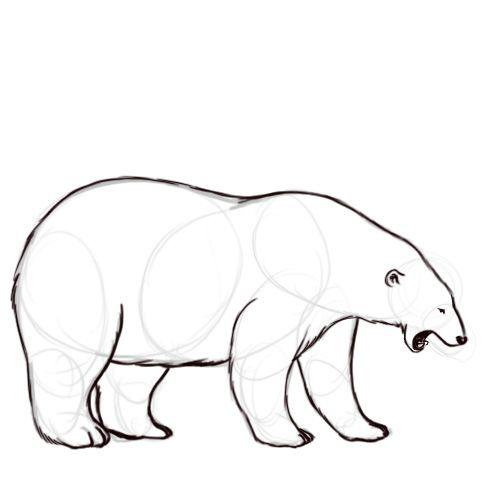 Dessiner un ours polaire pinterest clairement polaires et ligne - Comment dessiner un ours ...