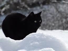 Risultati Immagini Per Gatti Neri Con Occhi Verdi Black Cats