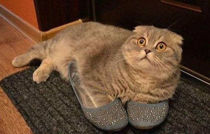 Без кота и жизнь не та! Самые замурчательные снимки котов всех времен.