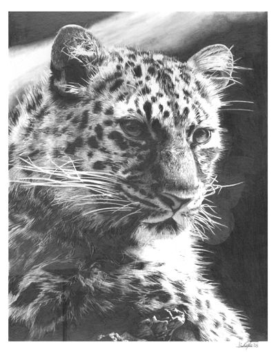 Leopard By Chandito Deviantart Com On Deviantart 11x14 Pencil On Vellum Bristol Paper Snow Leopard Tattoo Leopard Tattoos Snow Leopard