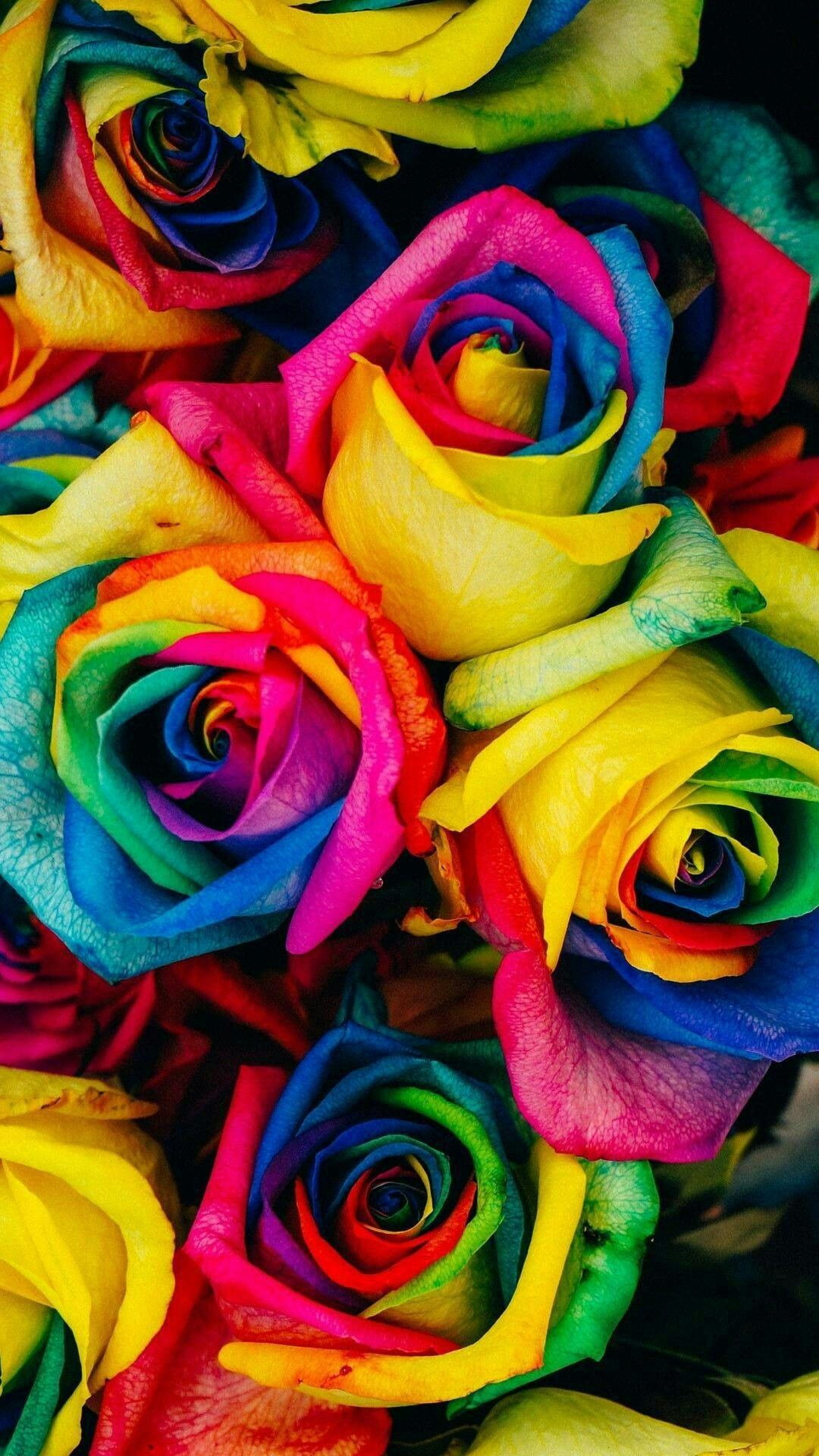 Pin By Lisa Green On Flowers With Images Rainbow Roses Rose