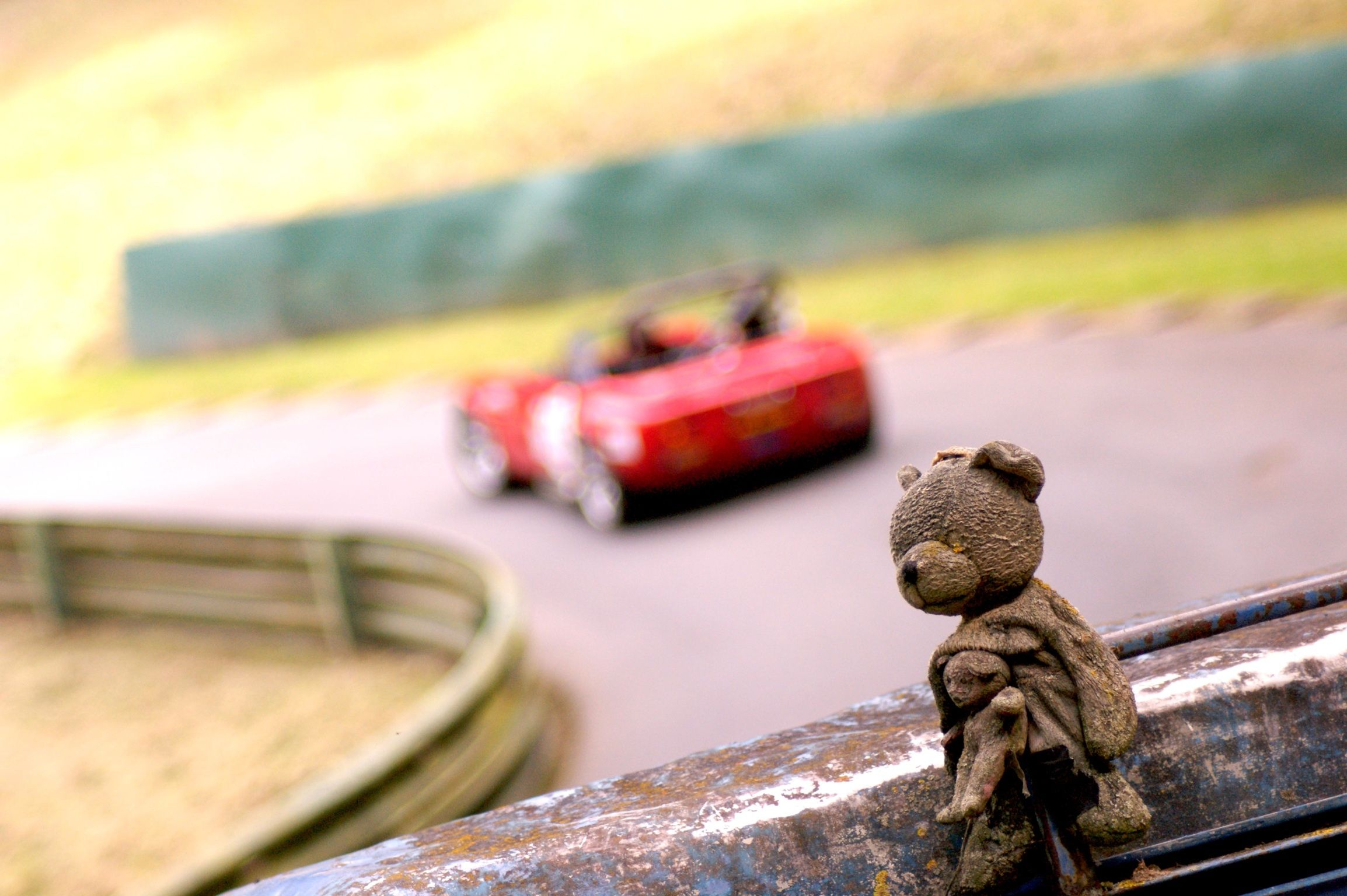 Teddy watching the races