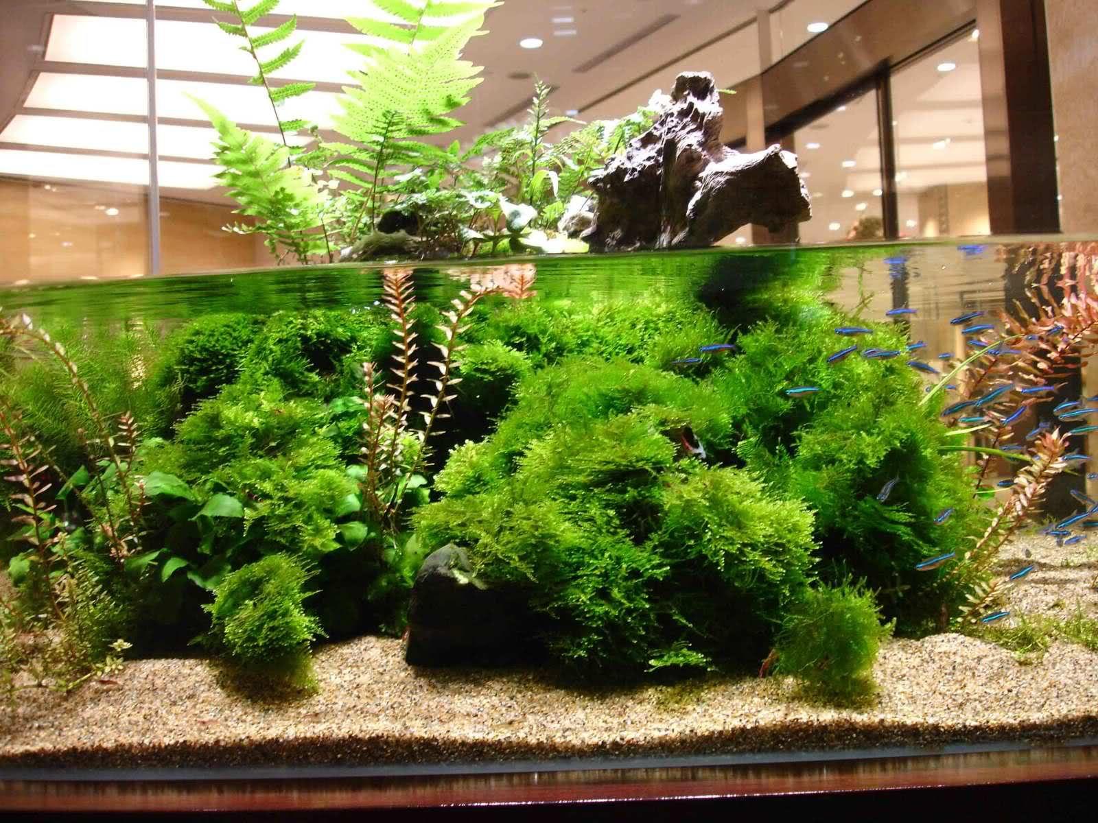9c470339853e2b2f27e43426ce1c8b68 Frais De Aquarium Tropical Schème