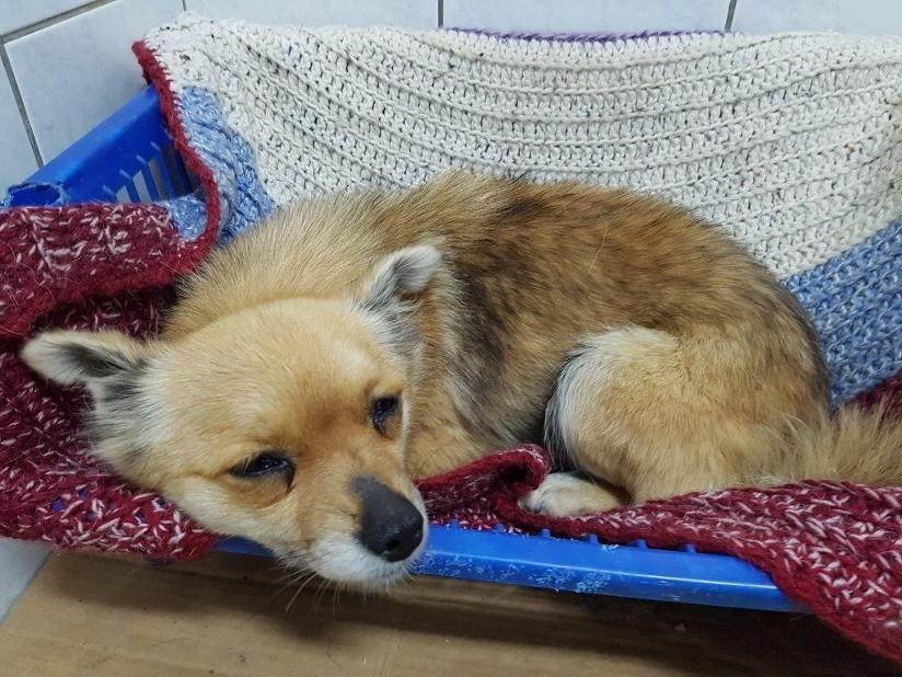 Hund, Mischling klein (Mischling, Hündin, 1 Jahr) Rumänien