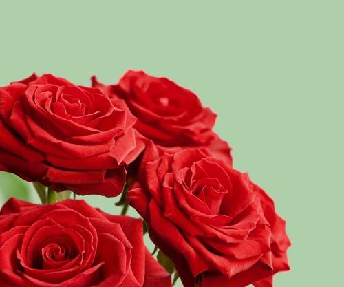 أجمل ورود الحب في العالم اجمل ورود الحب والرومانسية اجمل ورود الحب والعشق Zina Blog Red Anemone Flower Photos Anemone Flower