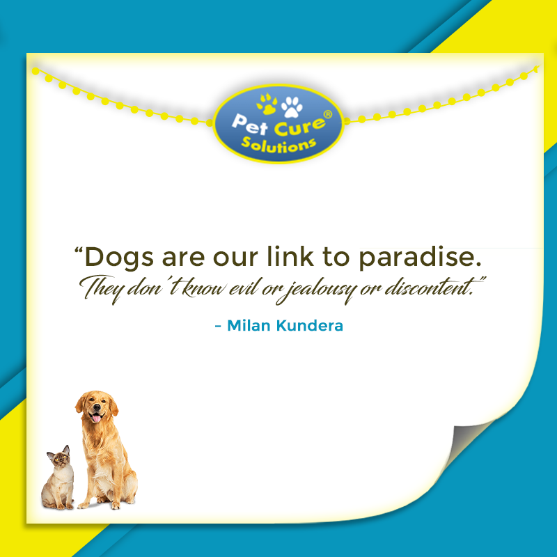 """""""Dogs are our link to paradise. They don't know evil or"""