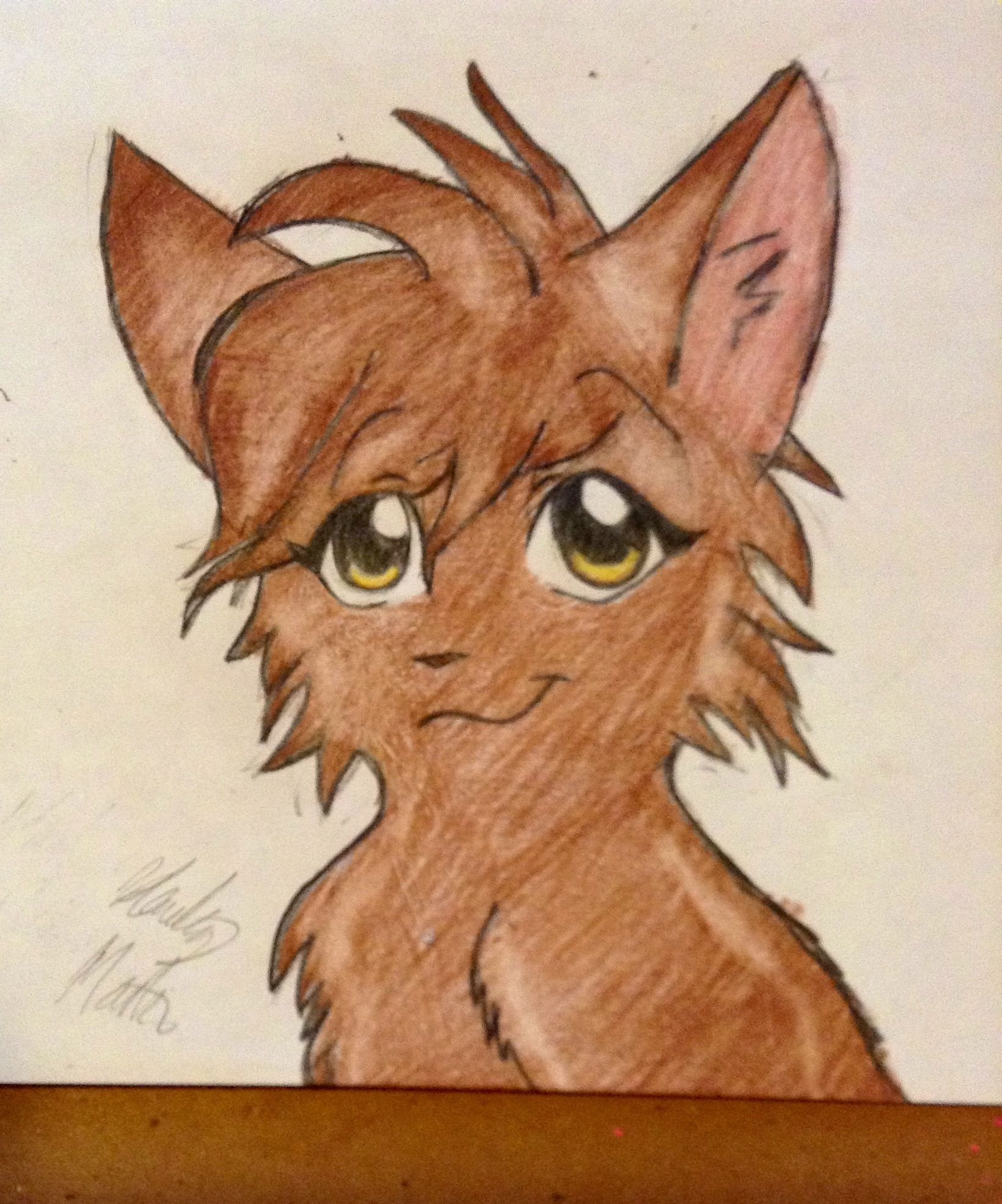 Warrior Cat (drawn By Hailey Martin) (well This Looks Like This Is My