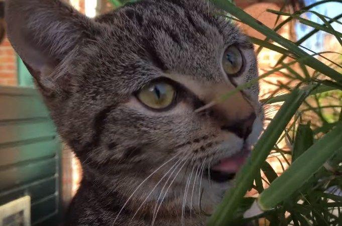 Meow Monday Plain Chicken® Animals, Cat fleas, Cats