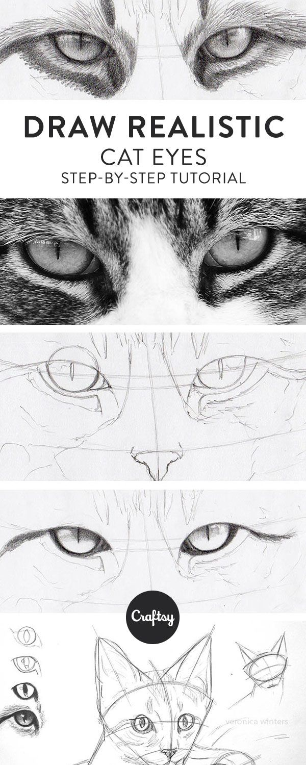 The Simple Guide to Drawing Realistic Cat Eyes Ogen