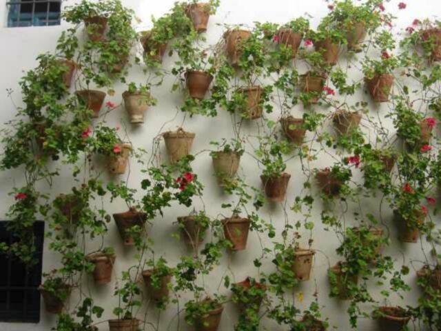 Wall Hanging Flower Pots google image result for http://wwwditerraneangardensociety