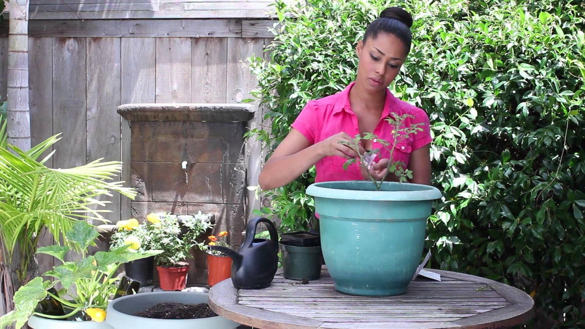 How To Companion Plant Tomato Dill The Chef S Garden 400 x 300