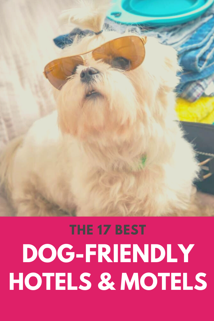 17 Best Dog Friendly Hotels Motels Don T Worry We Have Options For Any Budget Dogs Dogcare Dog Dogtravel H Dog Friendly Hotels Dog Friends Best Dogs