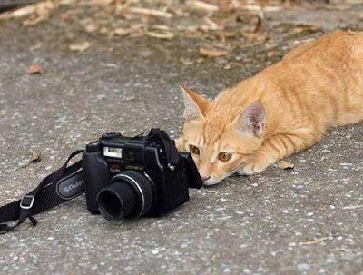 ネコ カメラマン db 貓咪大戰爭 DB 數據資料