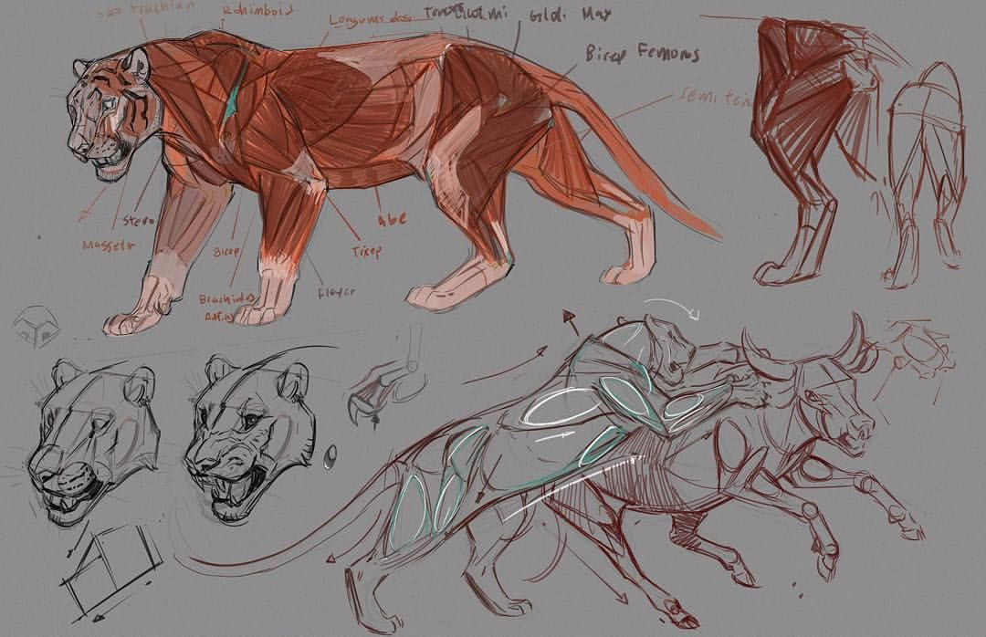 Jonathan Kuo Tigers Tutorial Beasts Pinterest Tigers
