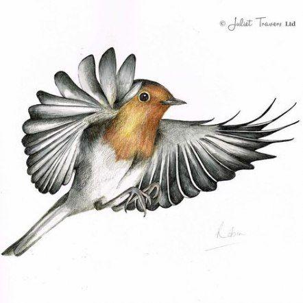 46+ ideas for robin bird wallpaper #wallpaper #bird   Bird ...