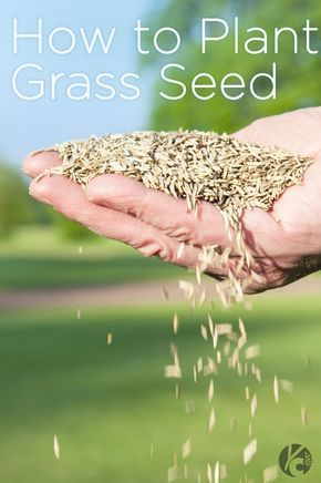 How to Plant Grass Seed    Great tips from choosing the right time of year to choosing the right seed. #grassseed