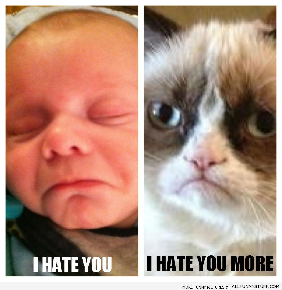 Baby Mason Versus Angry Cat Animals Pinterest Angry Cat - 49 hilarious pictures people animals