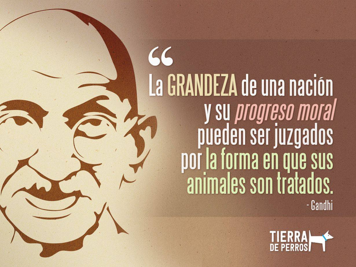 Frase Gandhi Perros Animales Quotes Frases