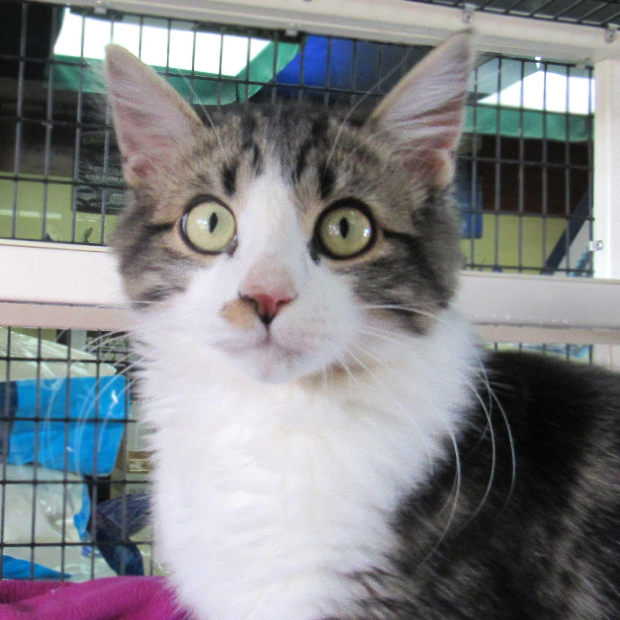 Cat & Kittens for Adoption in San Diego (met afbeeldingen)