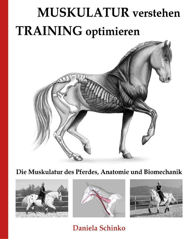Kenntnisse über die Funktionsweise der Muskeln helfen, das Pferd ...