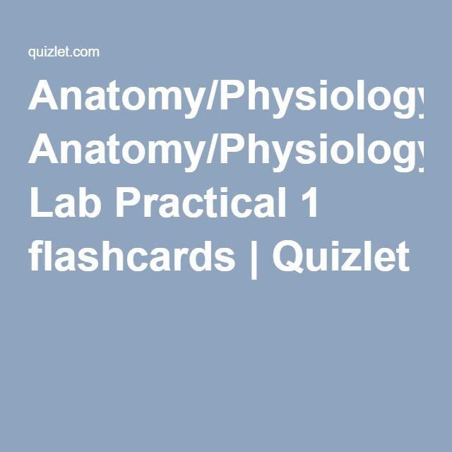 Neurology) Anatomy/Physiology Lab Practical 1 flashcards | Quizlet