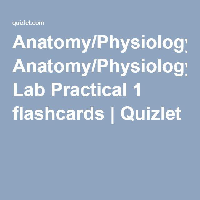 Neurology) Anatomy/Physiology Lab Practical 1 flashcards