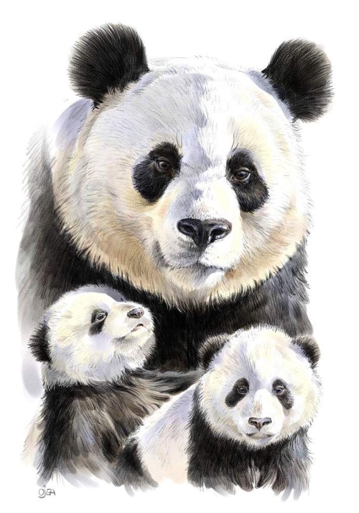 Pin By Emma Mccabe On Baby Panda In 2018 Panda Bebe Panda Animaux