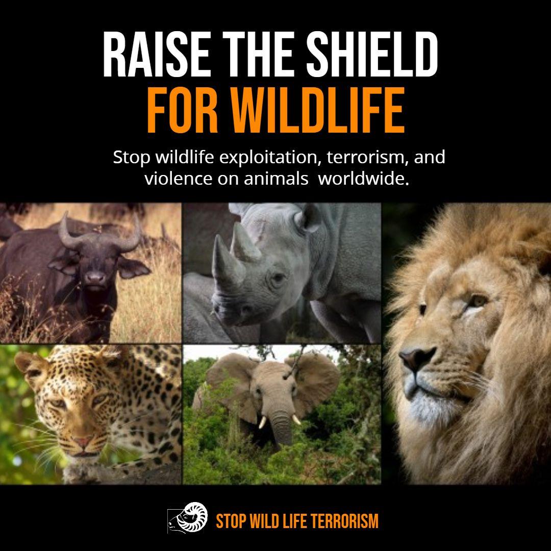 Animal welfare and conservation social media Instagram
