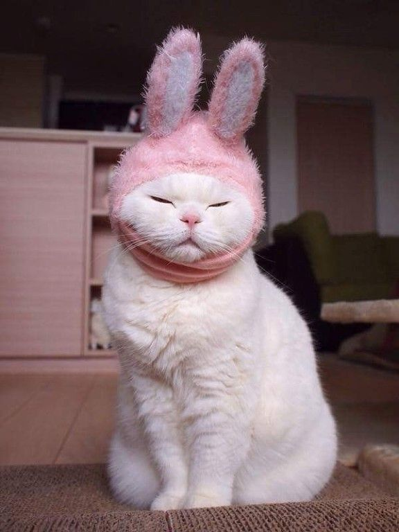 Funny bunny cat hats pinterest chatons et chats for Deguisement trop drole