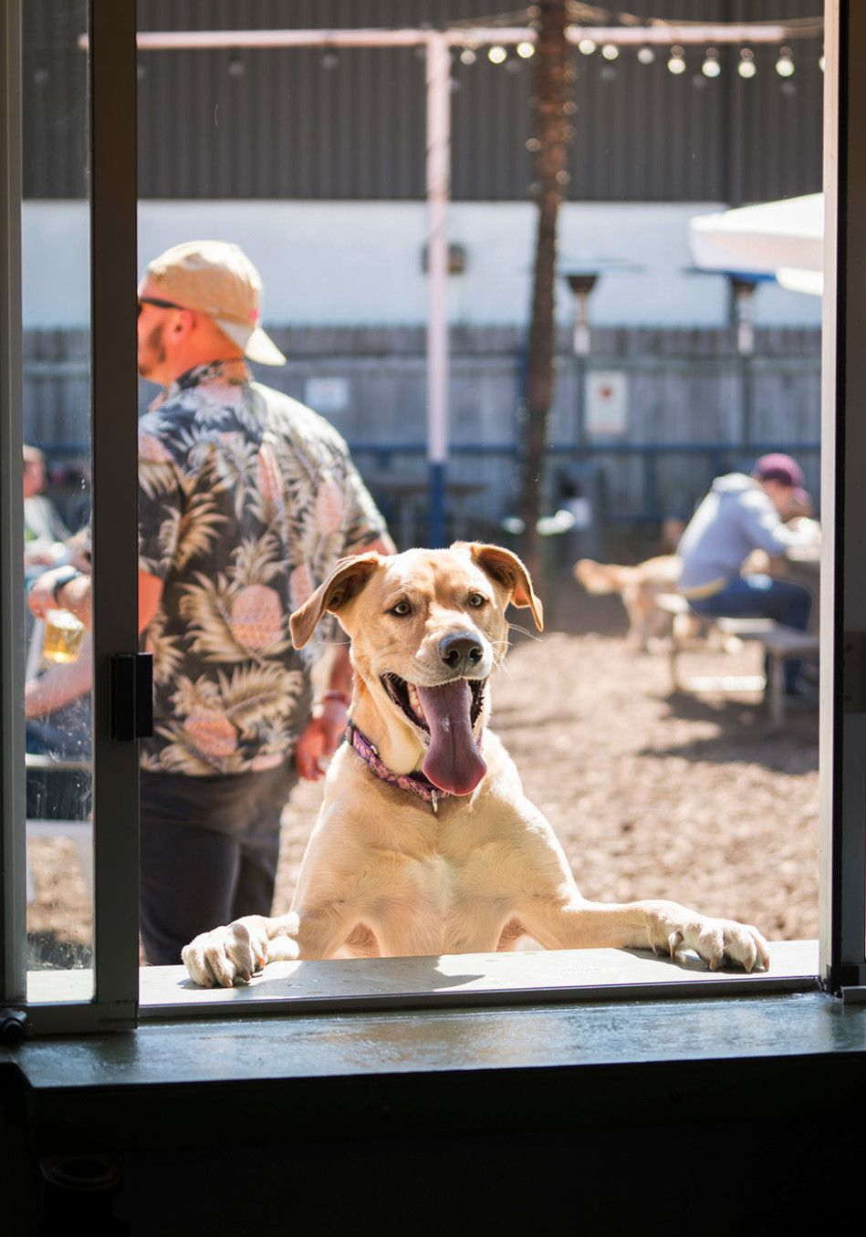 3 Of America S Most Pet Friendly Outdoor Spaces Pet Friendly