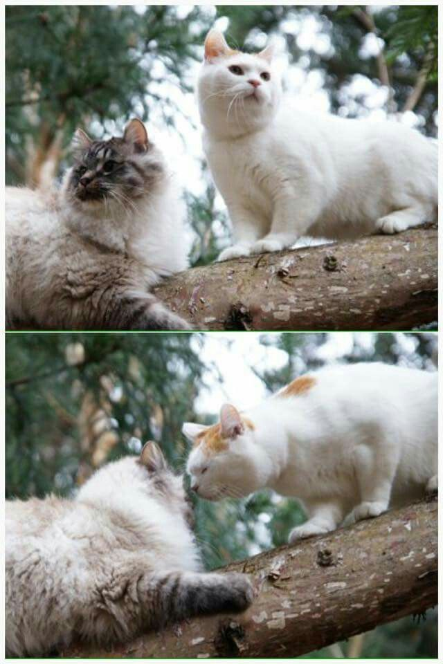 No one's looking,  kiss me now!