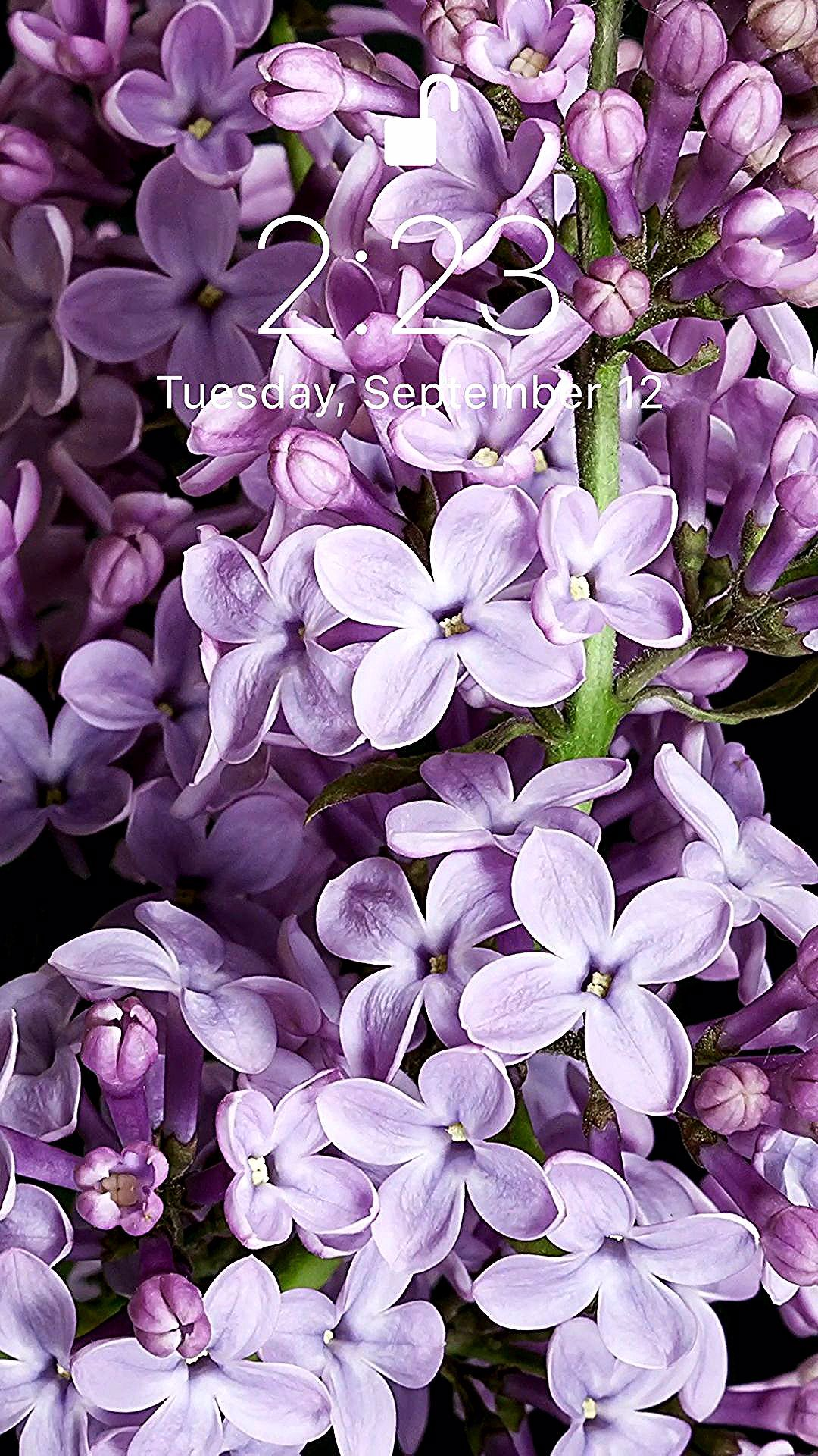 Amazing lilac wallpaper for your iPhone XS from Everpix