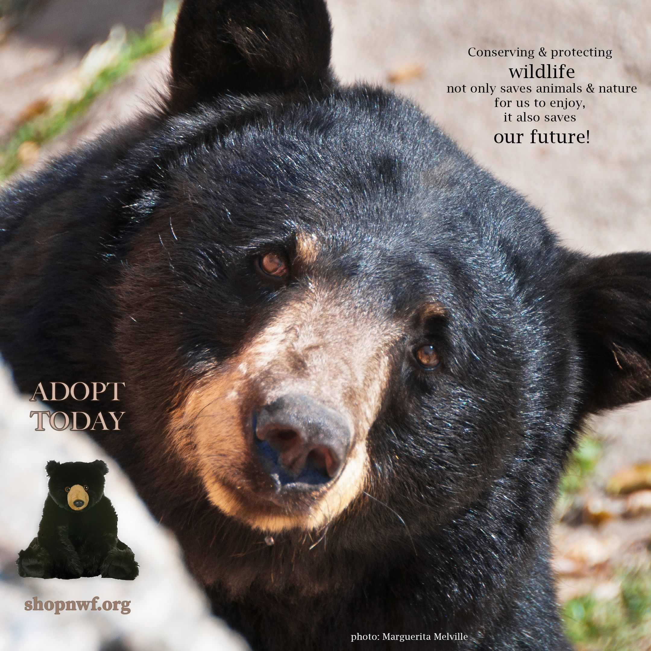 Symbolic Animal Adoptions