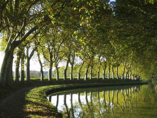 A Beautiful Footpath To Get Lost In. The Beauty Of France