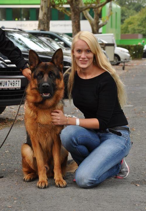 Arre Vom Huhnegrab German Shepherd Puppies German Shepherd Dogs German Shepherd Breeders
