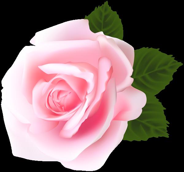 Rose Pink Png Clip Art Pink Rose Png Rose Images Hd Flower Wallpaper